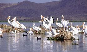 Nature reserve Ixtapa